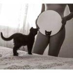 gatta allo specchio