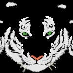 tiger-312245_960_720